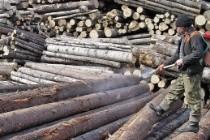 фумигации древесины