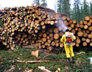 фумигация дерева