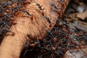уничтожение муравьев в москве