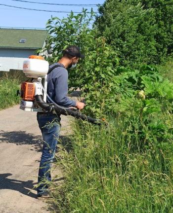 обработка борщевика гербицидами мотоопрыскивателем