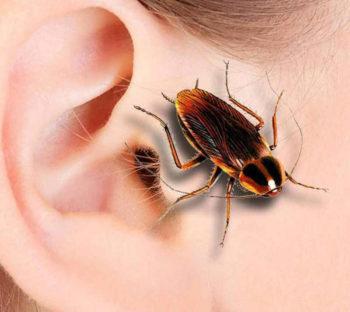 таракан в ухе